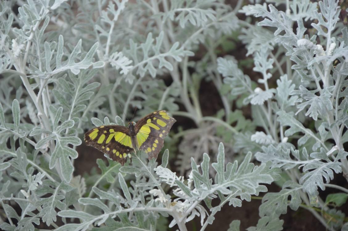 Motyle. Opowieści