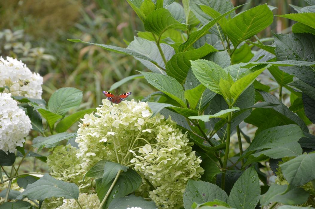 Mała Japonia – Ogród Japoński Siruwia