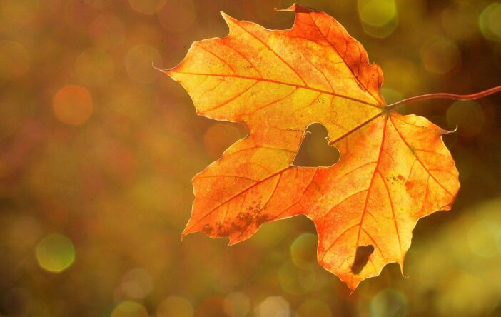 Cytaty o jesieni – piękne i nostalgiczne