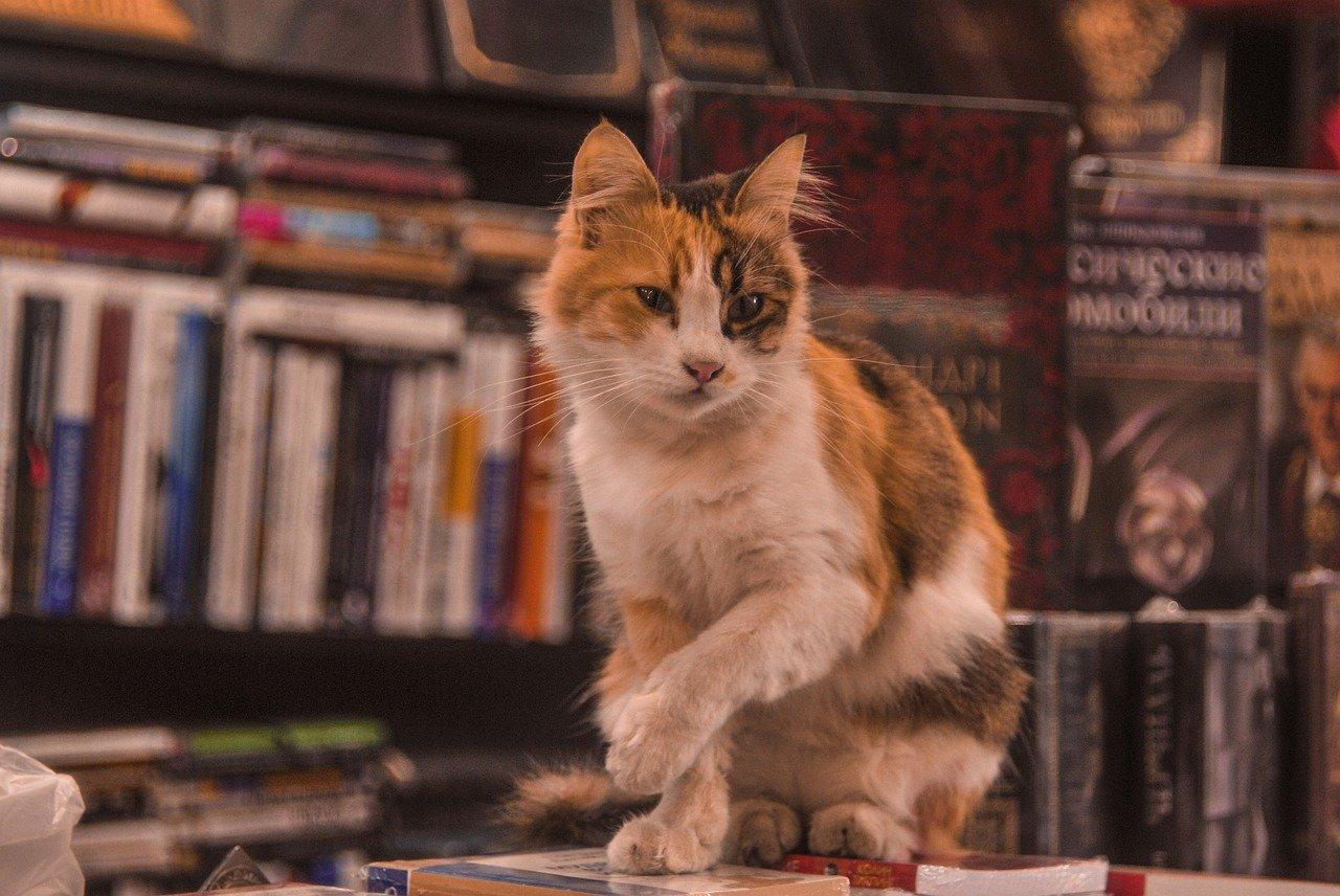 Kot wcytatach zprozy ipoezji