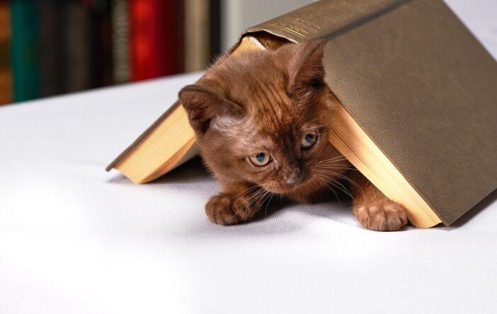 Kot w cytatach z prozy i poezji