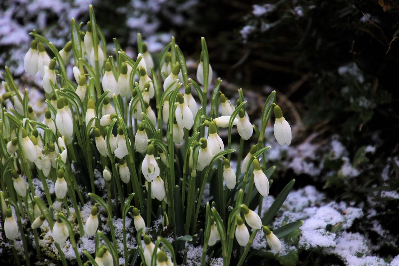 zaranie wiosny, pora roku, wczesna wiosna wliteraturze