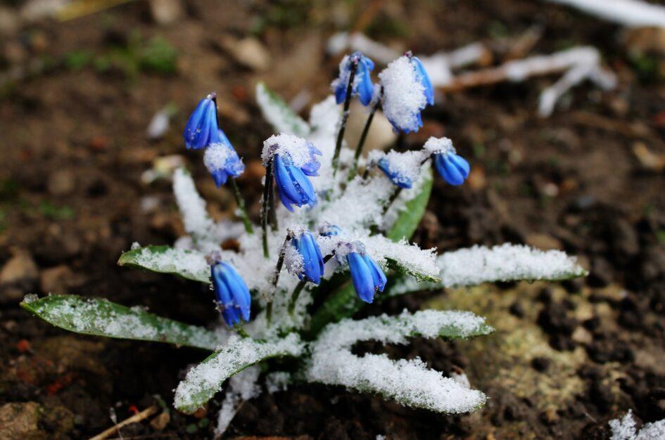 Ciekawostki, cytaty z wierszy i przysłowia o marcu
