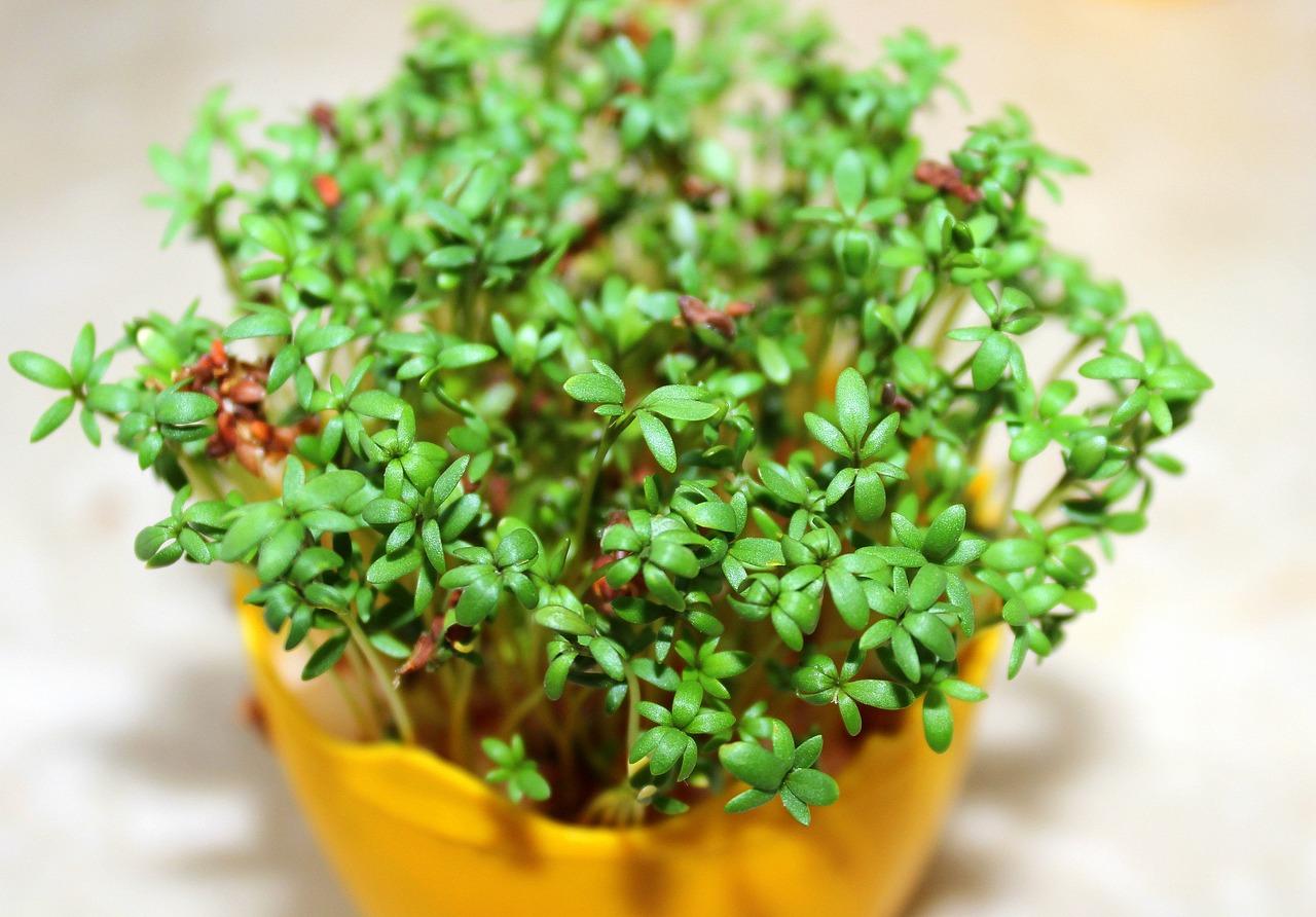 Wielkanocne rośliny