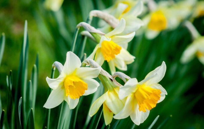 Wielkanocne rośliny – wiosenna zieleń