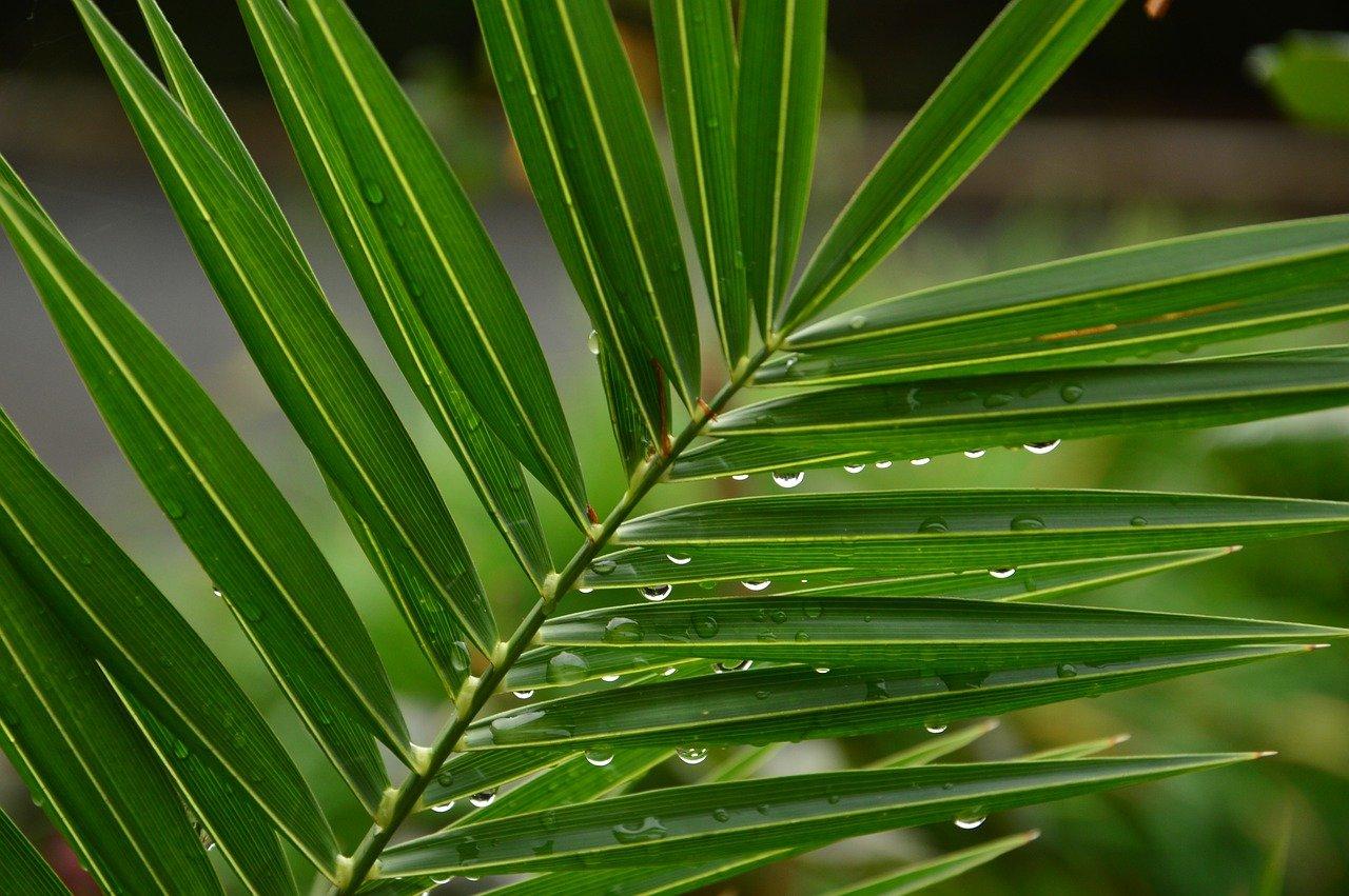 Ja zrobić palmę wielkanocną