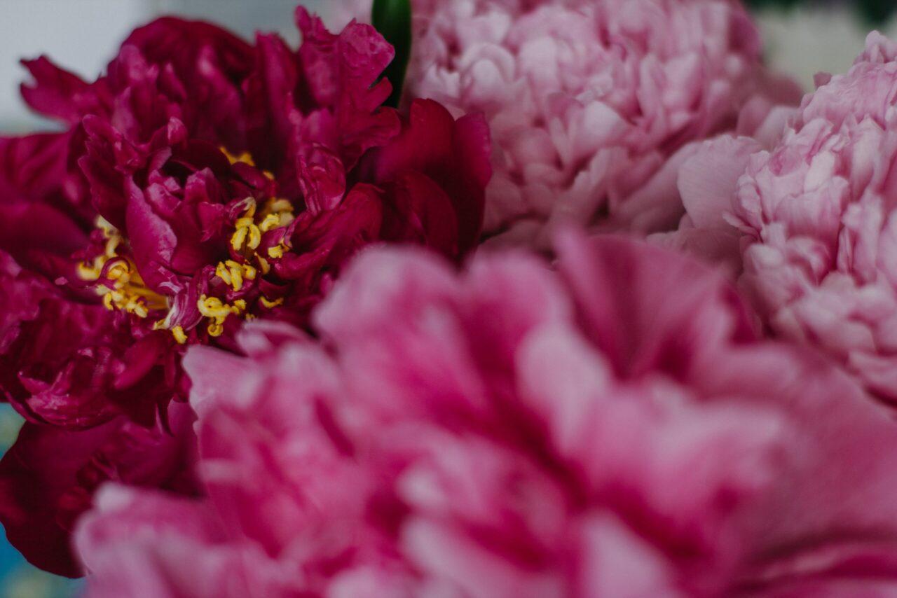 Kocham kwiaty cytaty