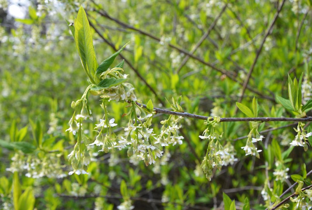 Glinna, arboretum, pomorze zachodnie