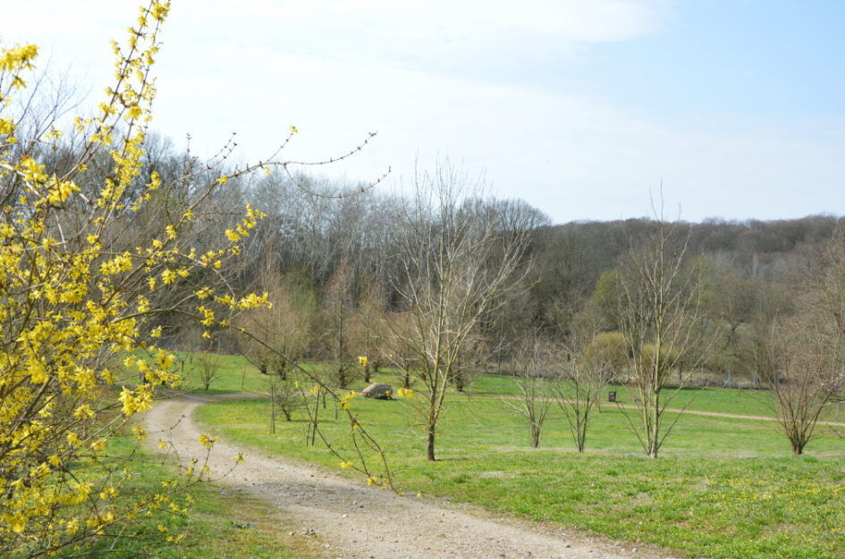 Wiosenny spacer po arboretum w Glinnej