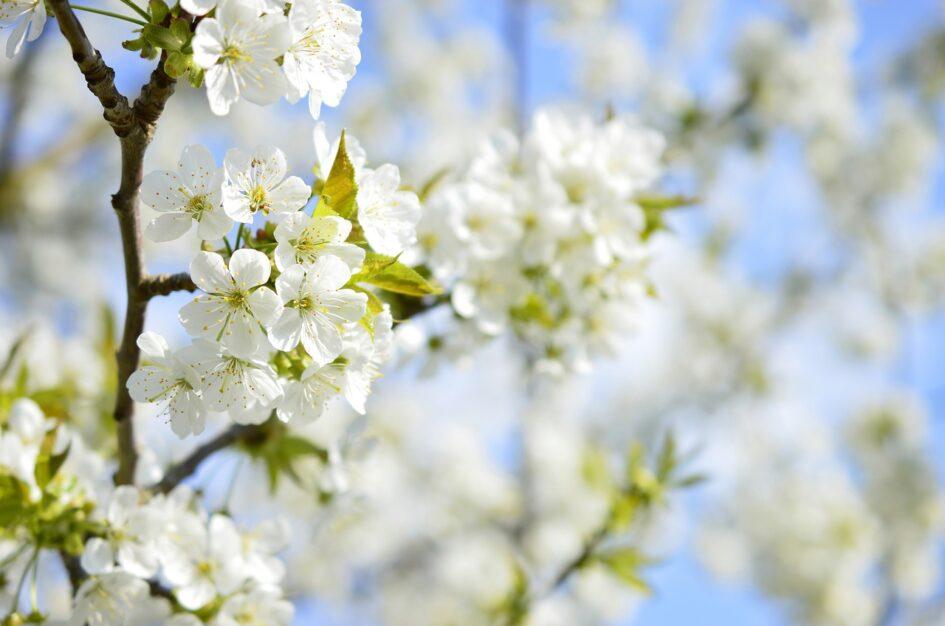 Ciekawostki, cytaty i przysłowia o kwietniu