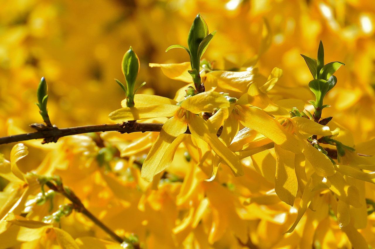 Jakie kwiaty kwitną wkwietniu?