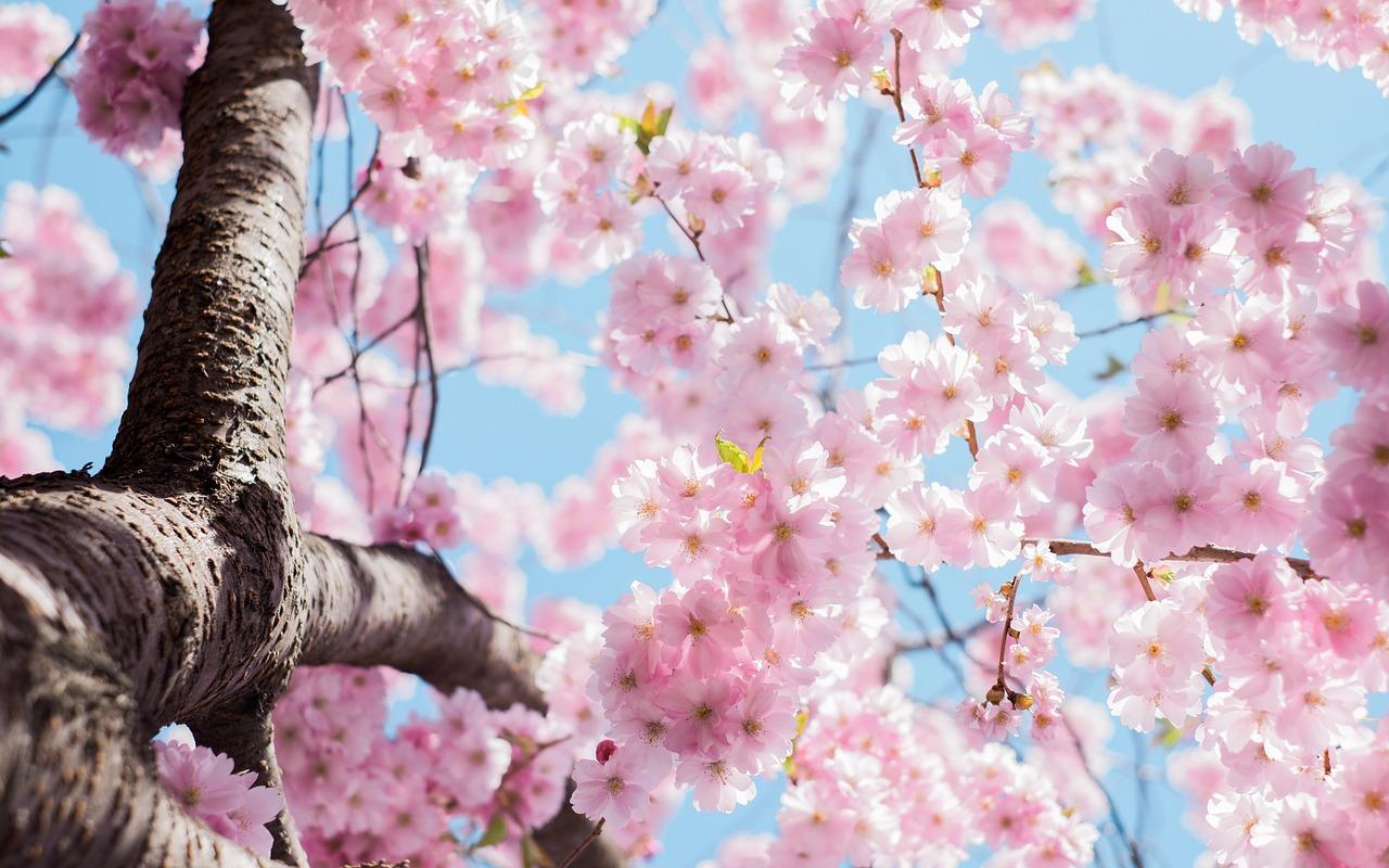 Symbol drzewa: cytaty iprzysłowia odrzewach