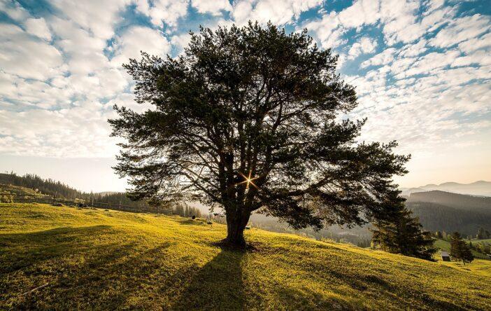 Cytaty o drzewach: z poezji, prozy i inne