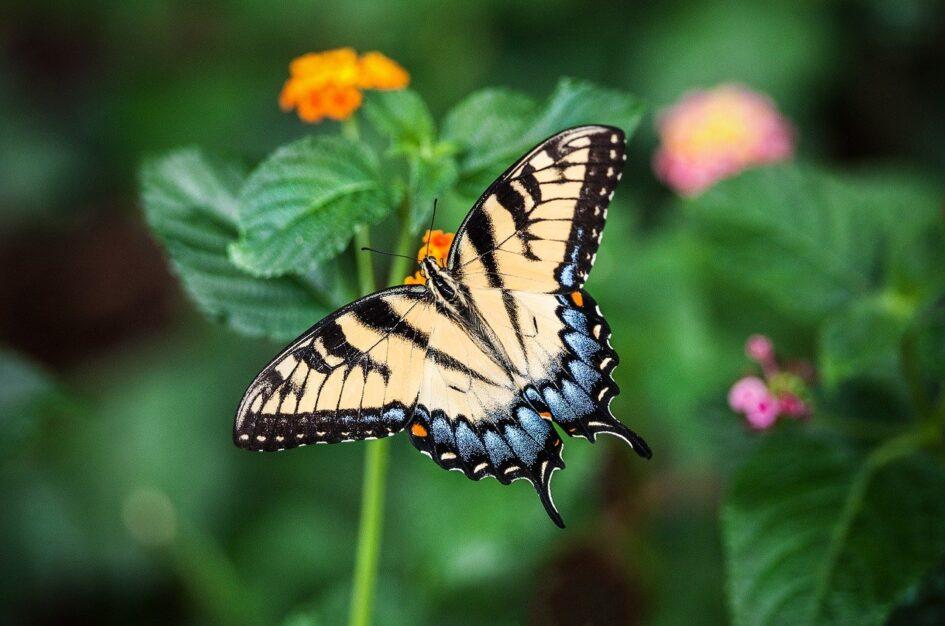 Cytaty o motylach: z książek, wierszy i nie tylko