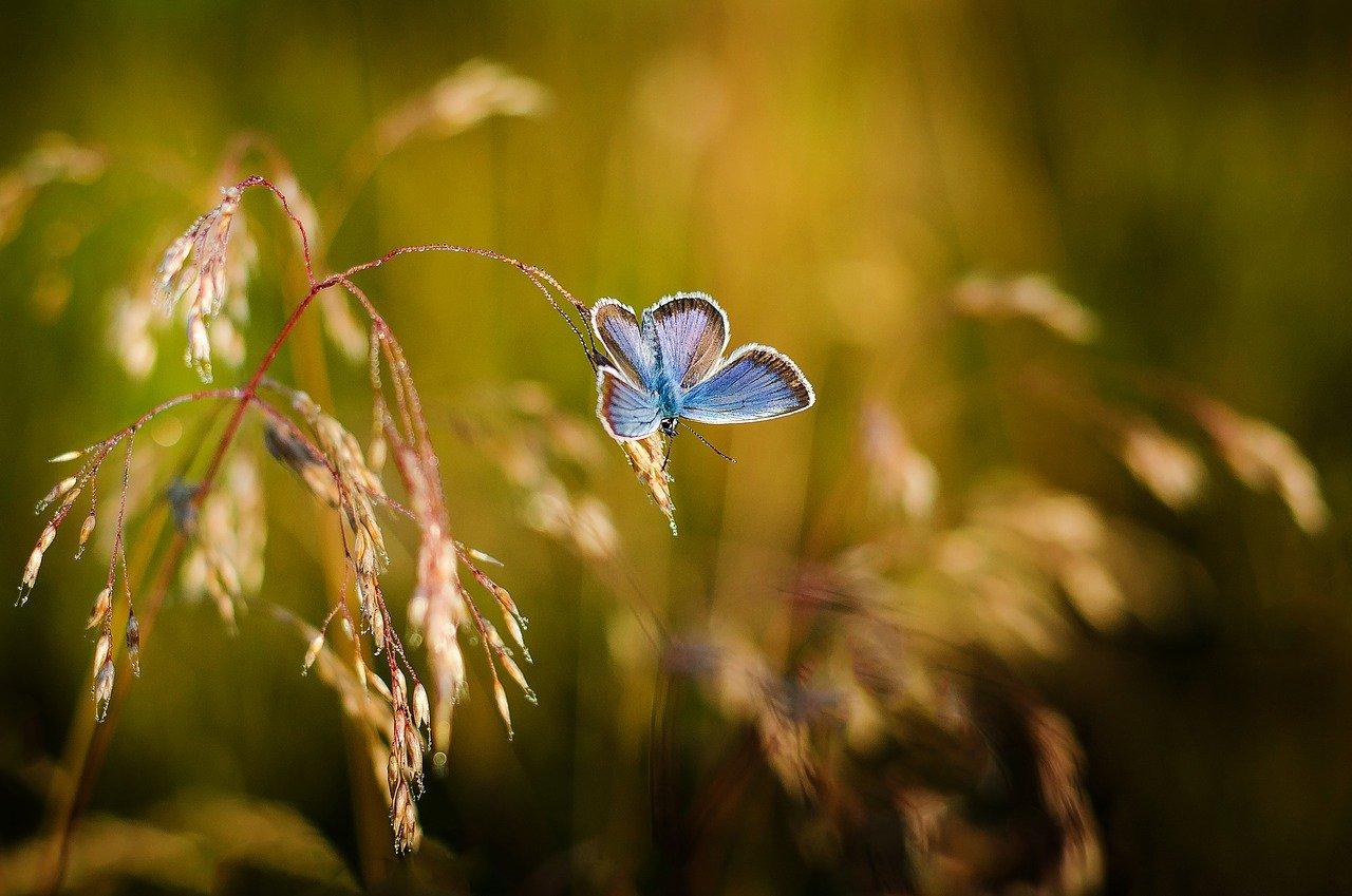 wiersze motyle
