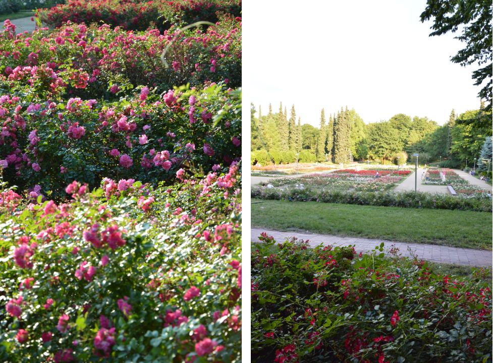 Ogród Różany wSzczecinie