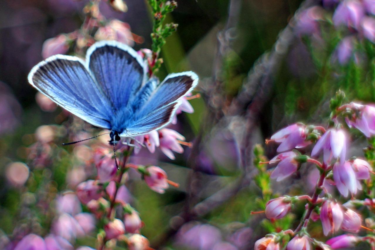 Motyl znaczenie dla człowieka