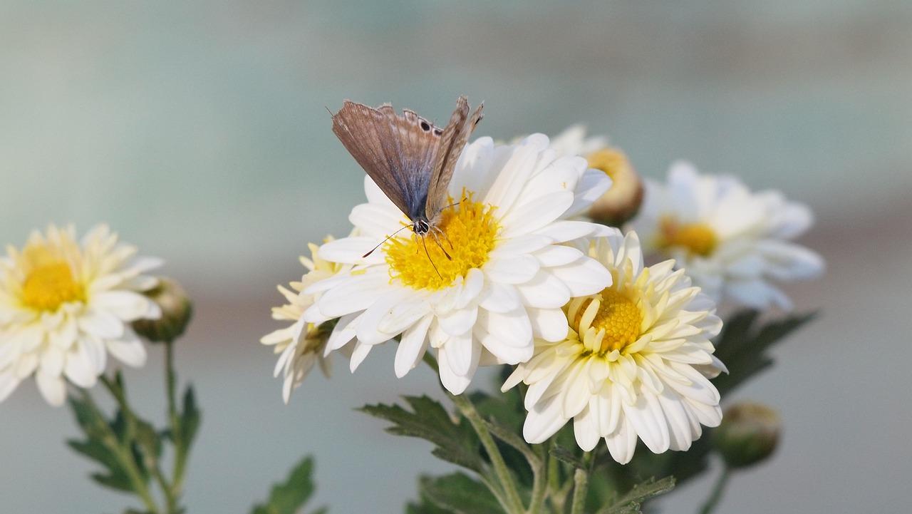 Co symbolizuje motyl?