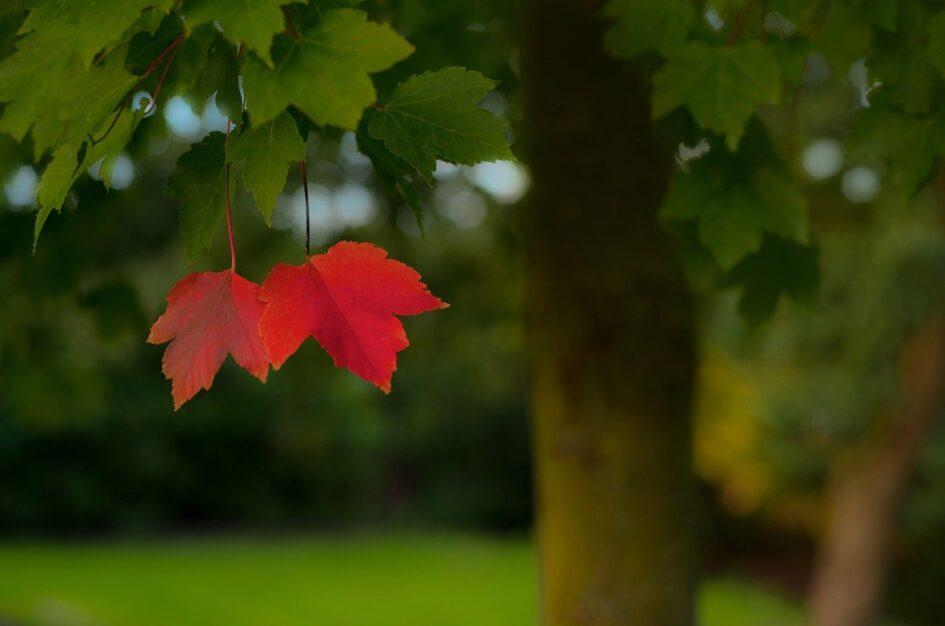 Ciekawostki, cytaty i przysłowia na wrzesień