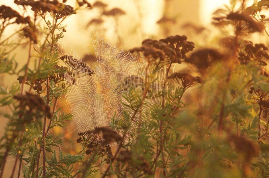 Złota jesień Babie lato