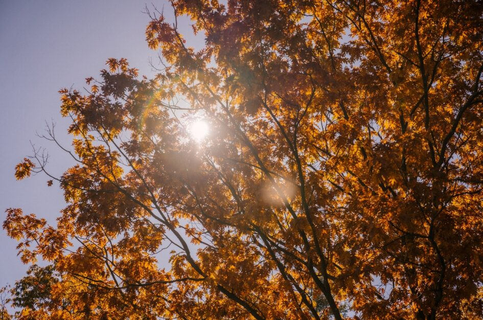 Równonoc jesienna – tradycja, ciekawostki, magia