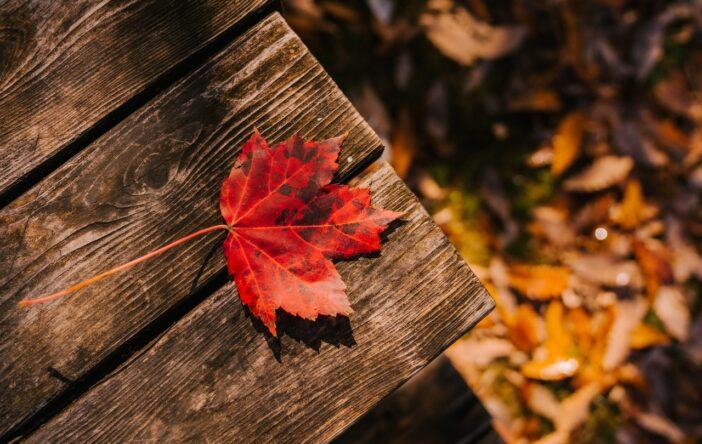 Ciekawostki, cytaty i przysłowia na październik