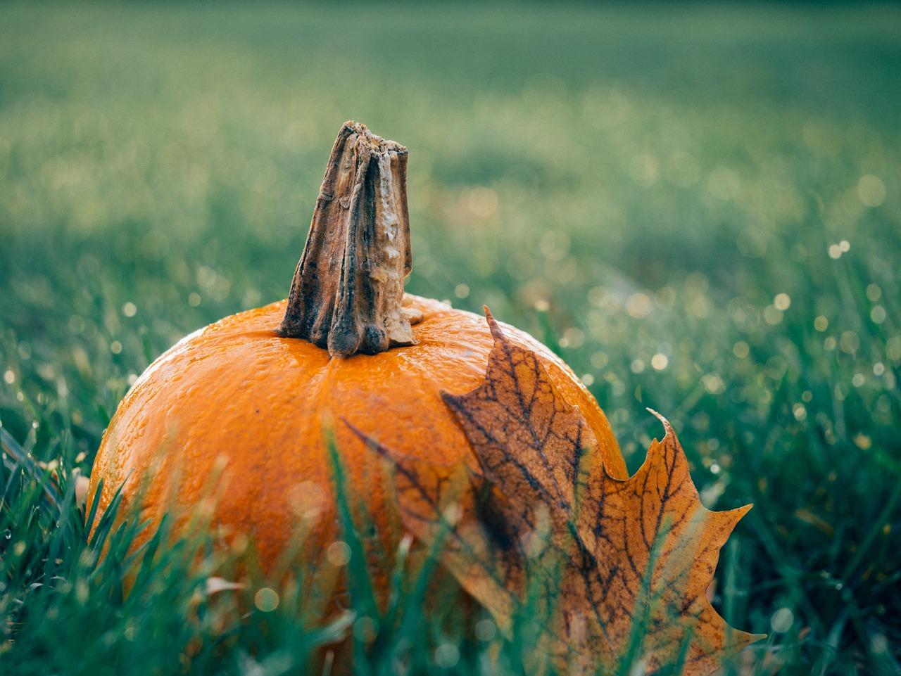 wrzesień ciekawostki